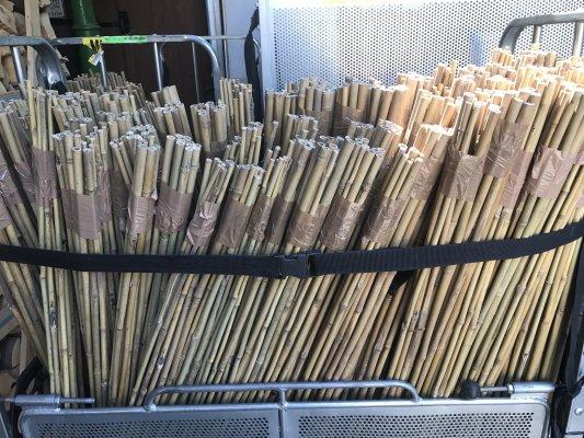 6 x Ceratostigma Plumbaginoides Chinesische Bleiwurz Kleincontainer 9cm x 9cm